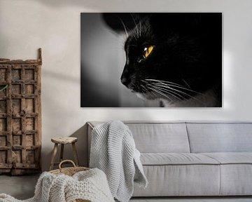 Portrait de chat en noir et blanc