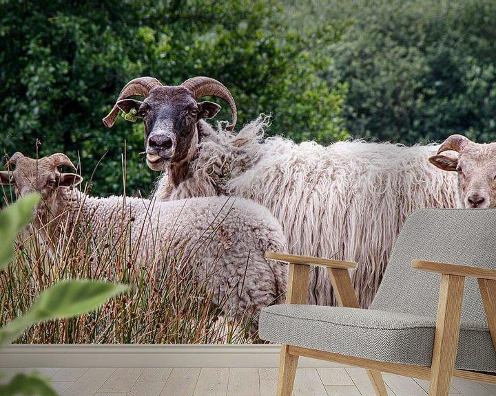 Beispiel fototapete: Schaf streckt die Zunge heraus. von Anjo ten Kate