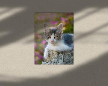 Schattig jong tweekleurig katte poesje van Katho Menden