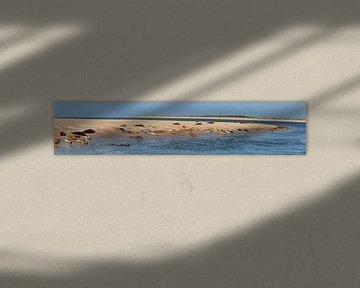Phoques se reposant sur un banc de sable près d'Ameland