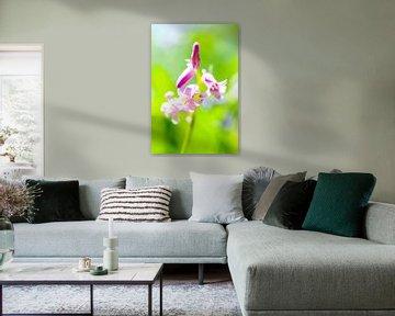 Wilde Hyacint von Sjoerd van der Wal