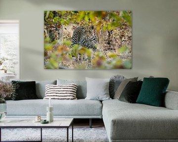 Nieuwsgierige luipaard van Denise Stevens