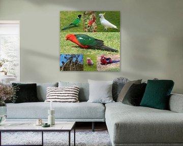 Australische Papageien von Ines Porada