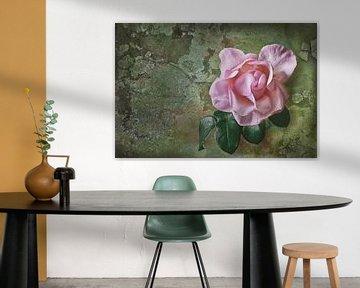 rosa Rose von Dieter Beselt