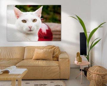 Porträt einer weißen Katze draußen im Garten von Ivonne Wierink