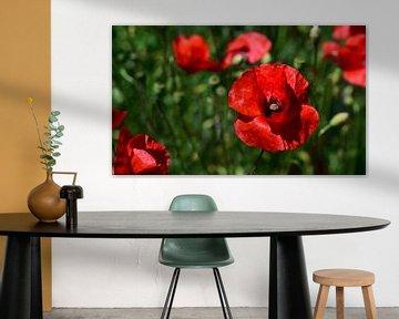 Blühender roter Klatschmohn von Ulrike Leone