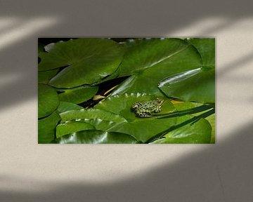 Ein grüner Frosch auf einem Blatt von Ulrike Leone
