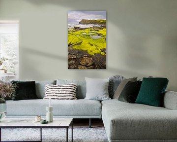 Grüne Küste von Denis Feiner
