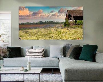 Die Hütte auf den Feldern von Greet Thijs