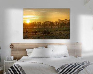 Schafherde vor der aufgehenden Sonne von cuhle-fotos