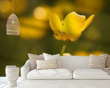 Boterbloempje van Freya Clauwaert
