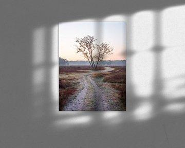 Dubbele boom van Mattijs Diepraam