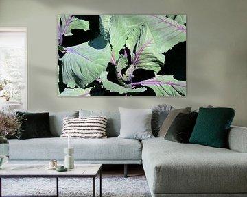 Rotkohl vor dunklem Hintergrund van Ulrike Leone