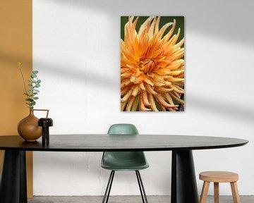 Feurige Dahlien-Blüte von Joachim Küster