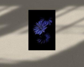 Chicorée blau von Christophe Fruyt