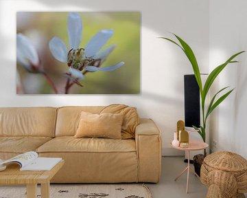 krentenboomp bloem in bloei van Karin Maartense