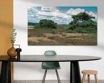 Landschap brunssumerheide van Barry van Rijswijk