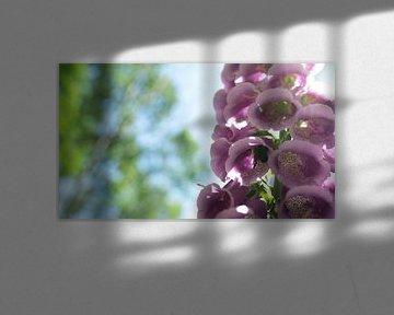 Roze bloemen in de Moringerwaard van Barry van Rijswijk