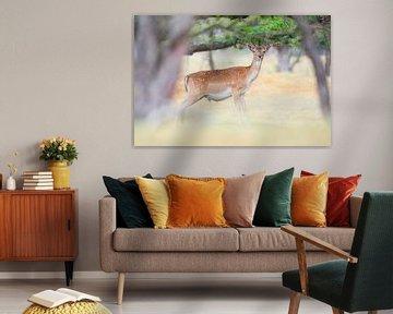 Ein Damhirsch, schöne weiche Farben von Wendy Tellier - Vastenhouw