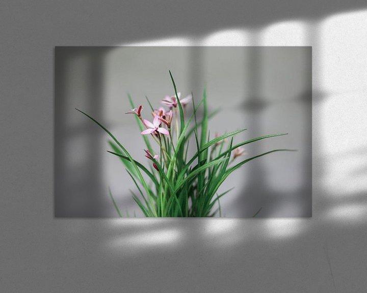 Impression: Fleur rose sur Carla Van Iersel