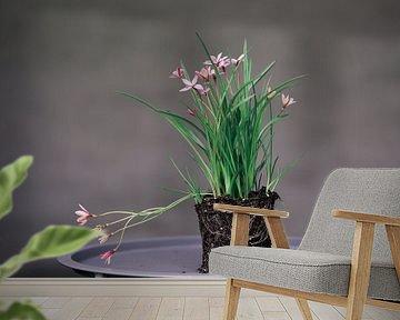 Roze bloem op blad van Carla Van Iersel