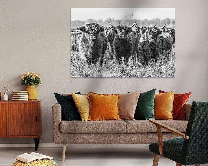 Sfeerimpressie: Schotse Hooglanders in de Onlanden van Andre Brasse Photography