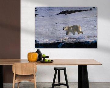 De IJsbeer van Merijn Loch