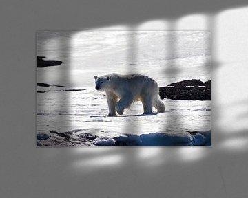Der mächtige Eisbär von Merijn Loch