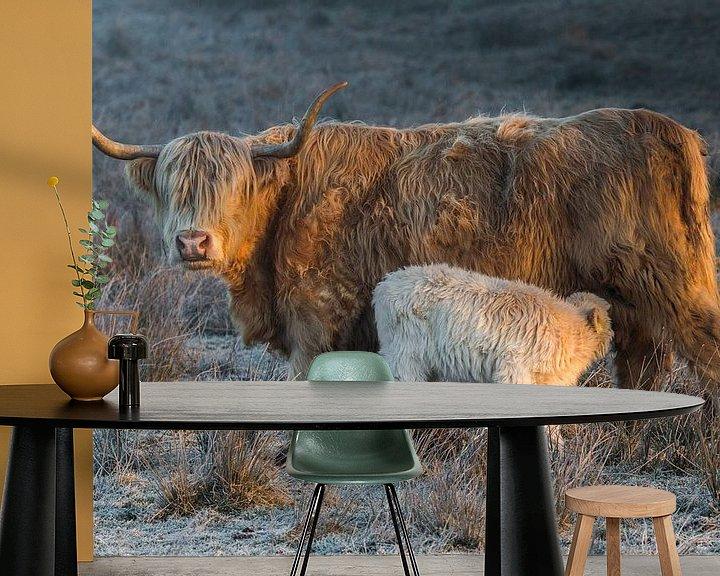 Sfeerimpressie behang: Schotse Hooglander koe met kalf van Andre Brasse Photography
