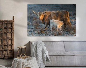 Schotse Hooglander koe met kalf van Andre Brasse Photography