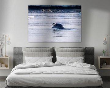 Zeehond van Merijn Loch
