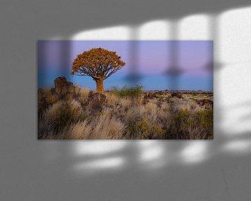 Schemering bij de kokerboom van Denis Feiner