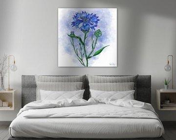 Blumenmotiv - Kornblume von Patricia Piotrak