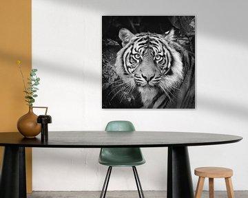 Portret van Sumatraanse tijger