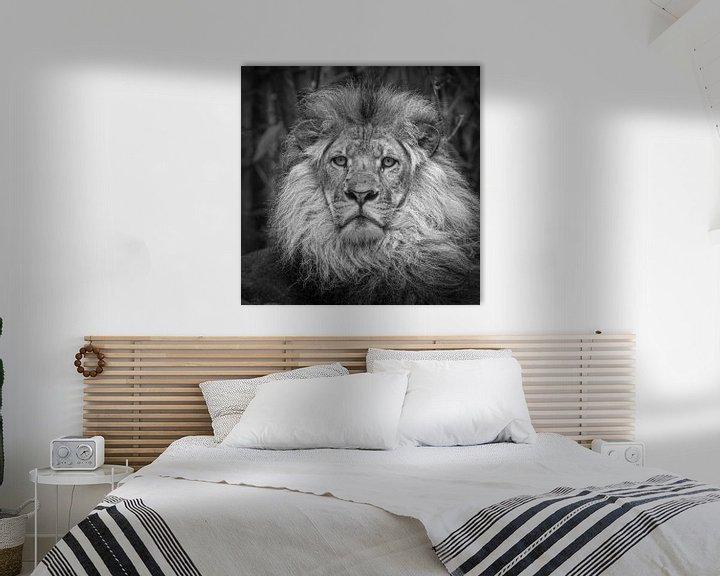 Impression: Lion (Panthera Leo) sur Frans Lemmens