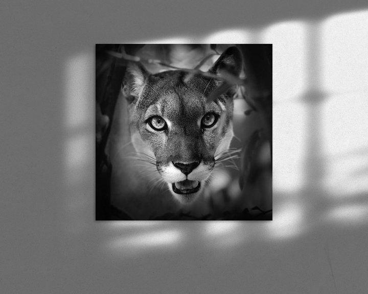 Impression: Portrait de Puma sur Frans Lemmens