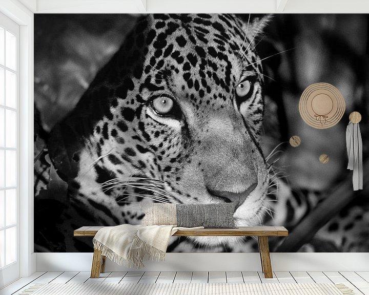 Beispiel fototapete: Porträt von Jaguar von Frans Lemmens