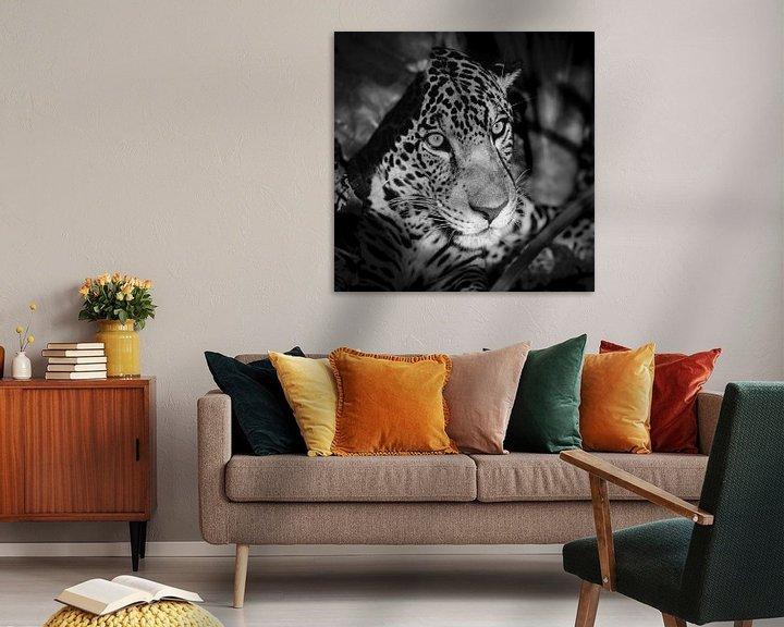 Beispiel: Porträt von Jaguar von Frans Lemmens