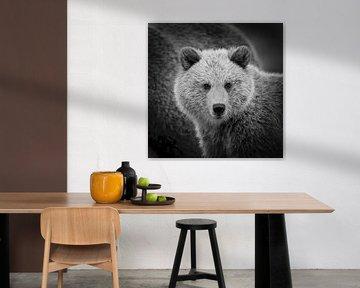 Jeune ours brun