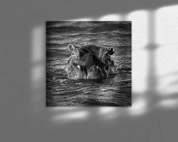 Flusspferd von Frans Lemmens