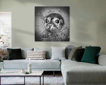 Le phoque commun