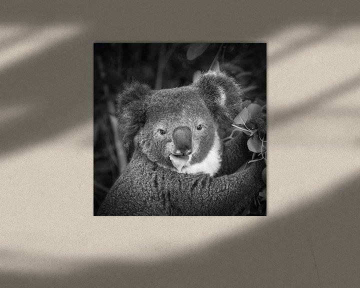 Impression: Le koala mange des feuilles sur Frans Lemmens