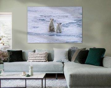 Eisbär-Welpen Spitzbergen von Merijn Loch
