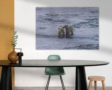 Junglöwen Eisbär Spitzbergen von Merijn Loch