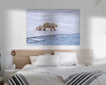 Moeder ijsbeer op jacht, haar 2 welpen zitten veilig bij haar. van Merijn Loch