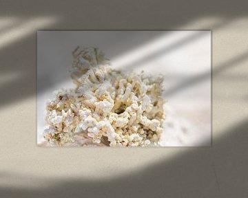 Wit koraal in het zonnetje van What I C