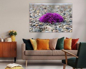 Plantje/bloem Spitsbergen van Merijn Loch