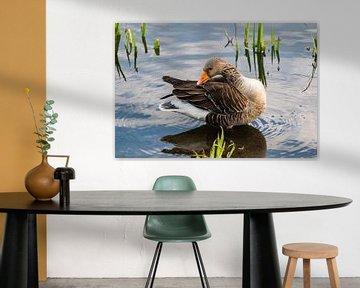 Ente mit Beinen im Wasser von Devlin Jacobs