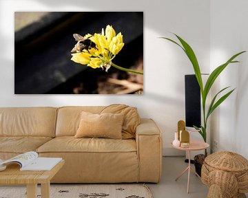 Bienenfliege auf Blume von hetty'sfotografie