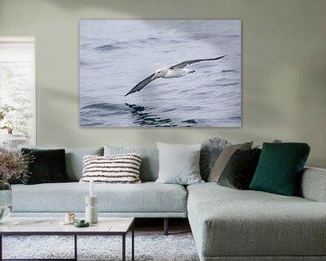 Albatros über dem Meer von Rick van der Weijde